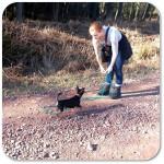 pinscher_dog_train
