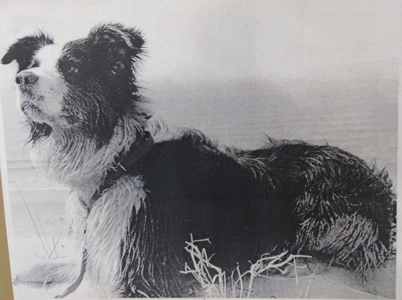 First dog, Casper, obedience Border Collie