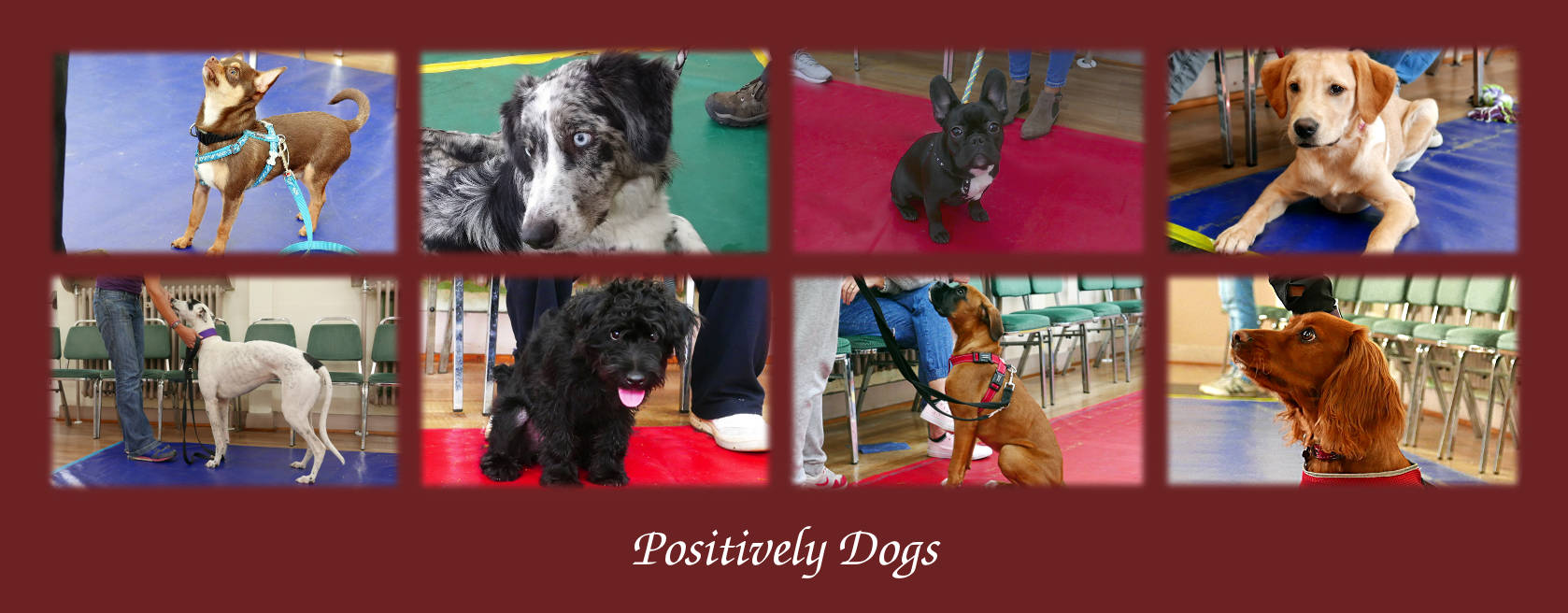 Positively Dogs Tuesday
