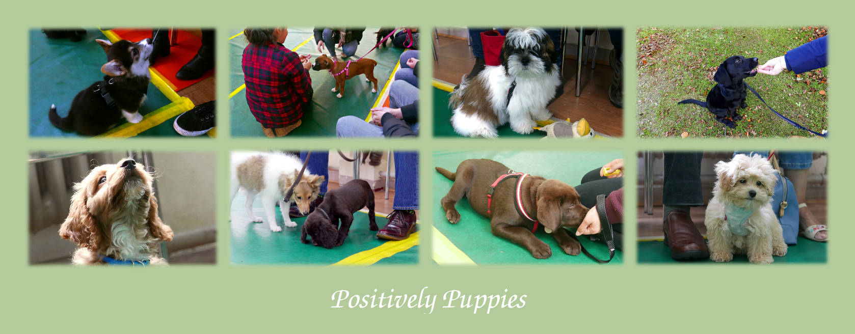 Puppy Class Gosforth Event