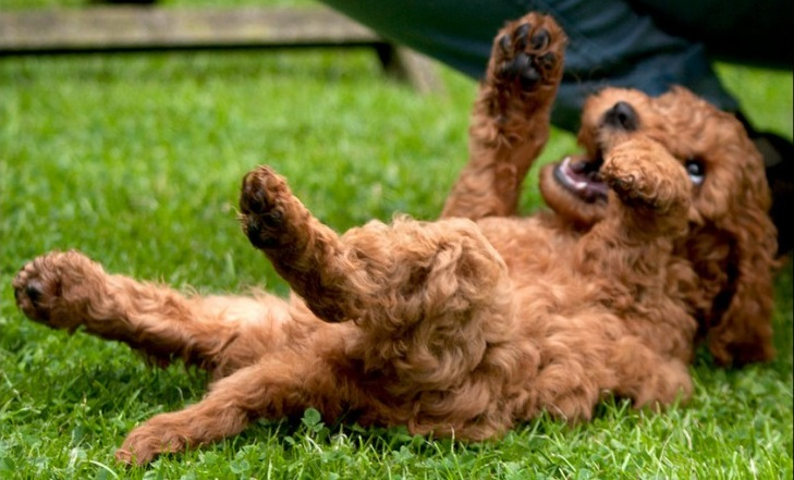 Click here to find out more about puppy classes