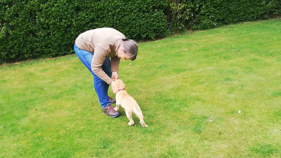 Hettie puppy does recall
